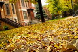 fall chicago